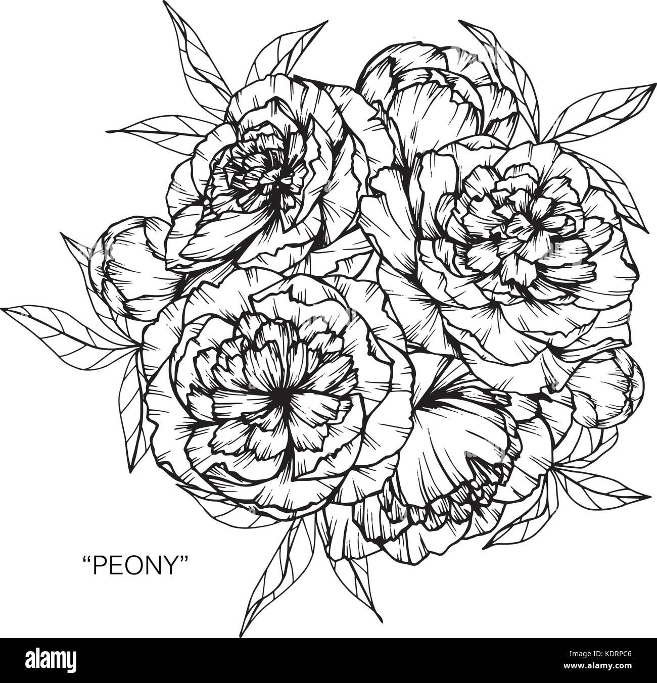 Bouquet De Fleurs De Pivoine Dessin Vecteurs Et Illustration