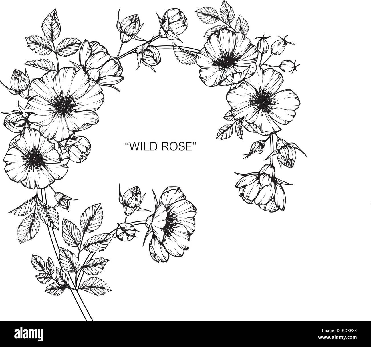 Dessin De Fleurs Roses Sauvages Illustration Noir Et Blanc Avec Des