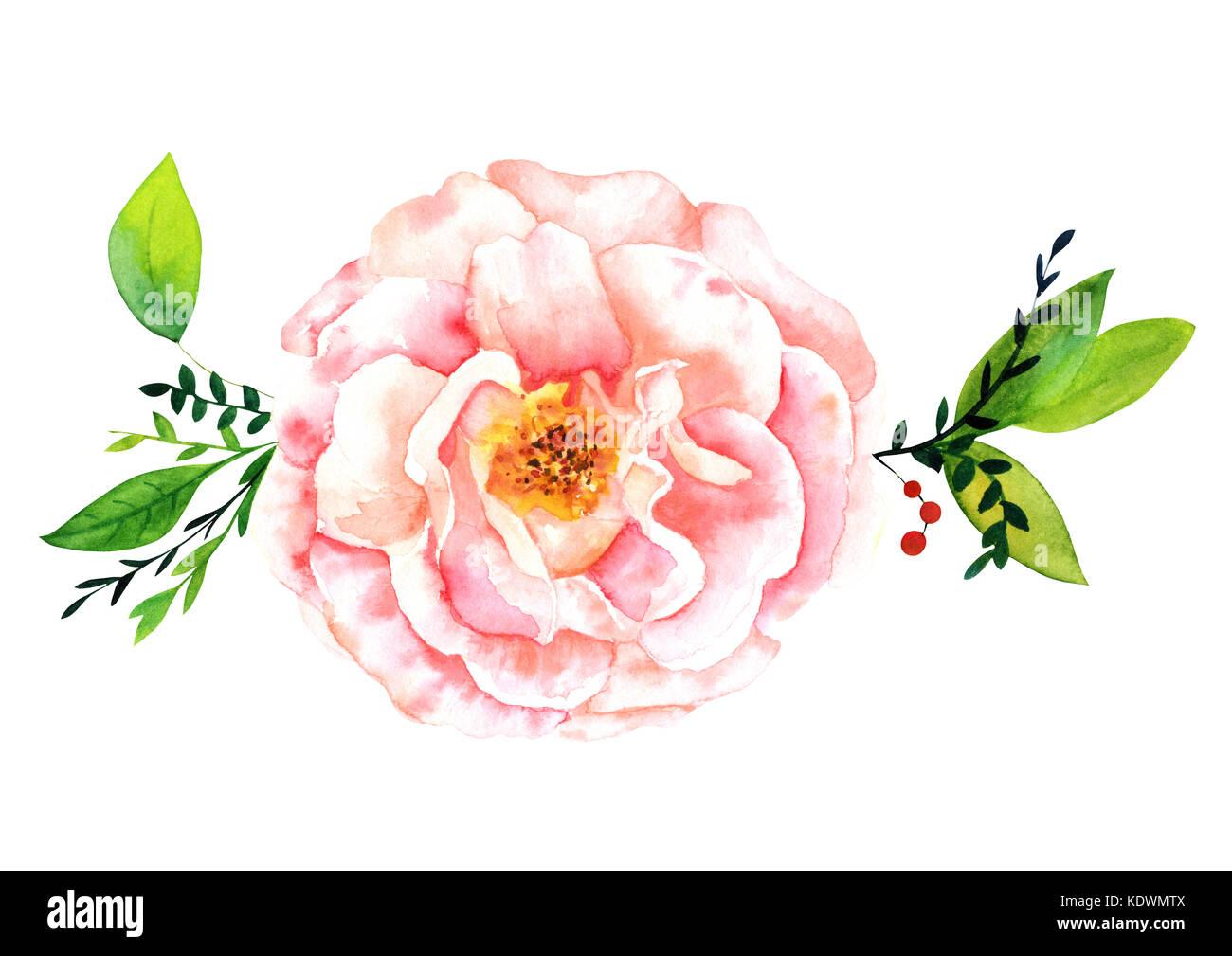Une Aquarelle Dessin D Une Tendre Fleur Rose Rose Avec Des Feuilles