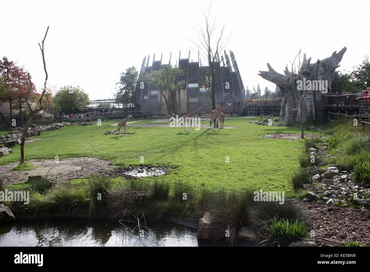 Zone de savane africaine au Zoo de Blijdorp de Rotterdam, aux Pays-Bas. avec le bâtiment où sont logés les girafes réticulés. Banque D'Images