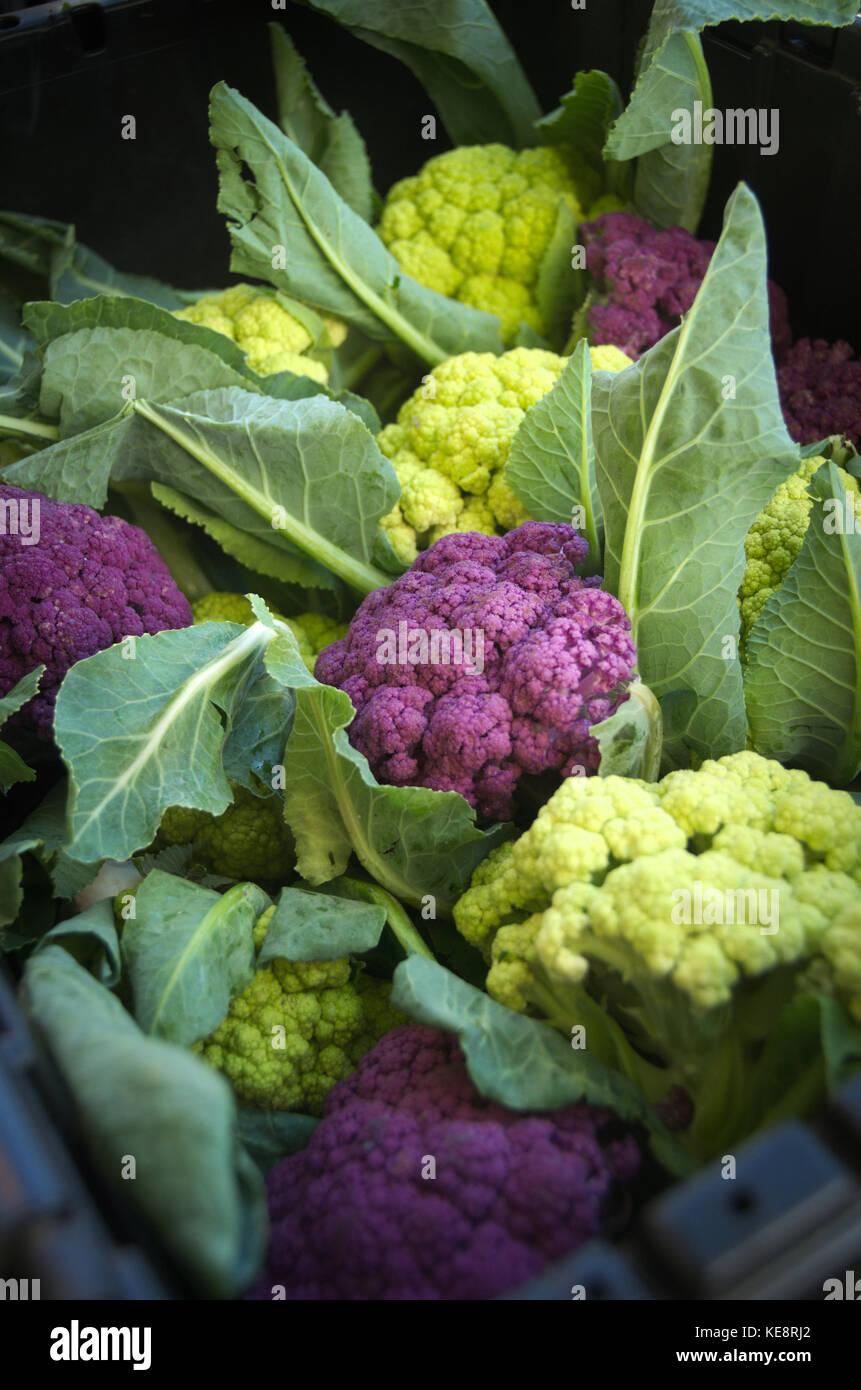 Choux-fleurs violet avec des feuilles fraîches bio en vrac marché fermier légumes Photo Stock