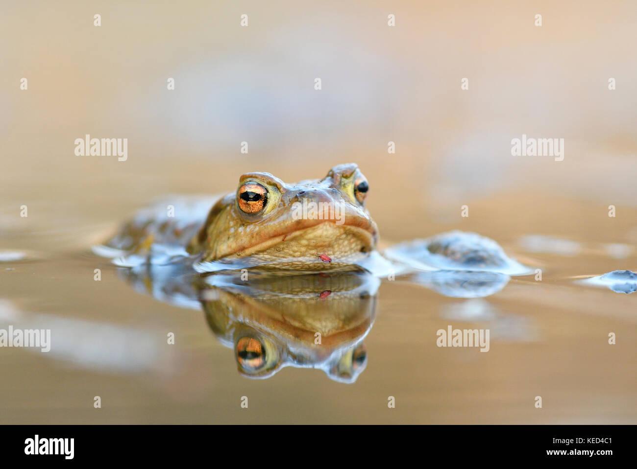 Komplex photos komplex images alamy