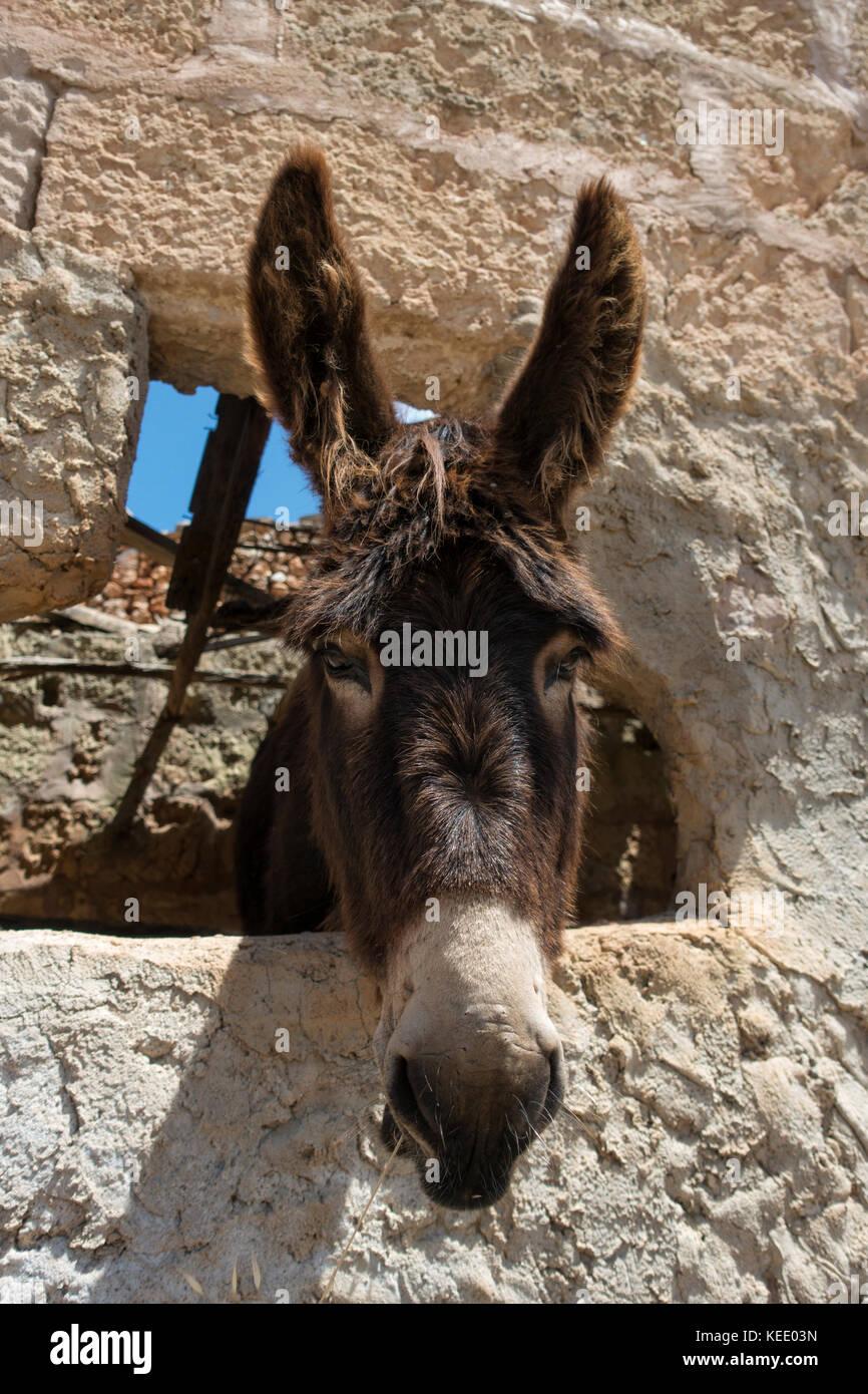 Portrait de l'âne Photo Stock