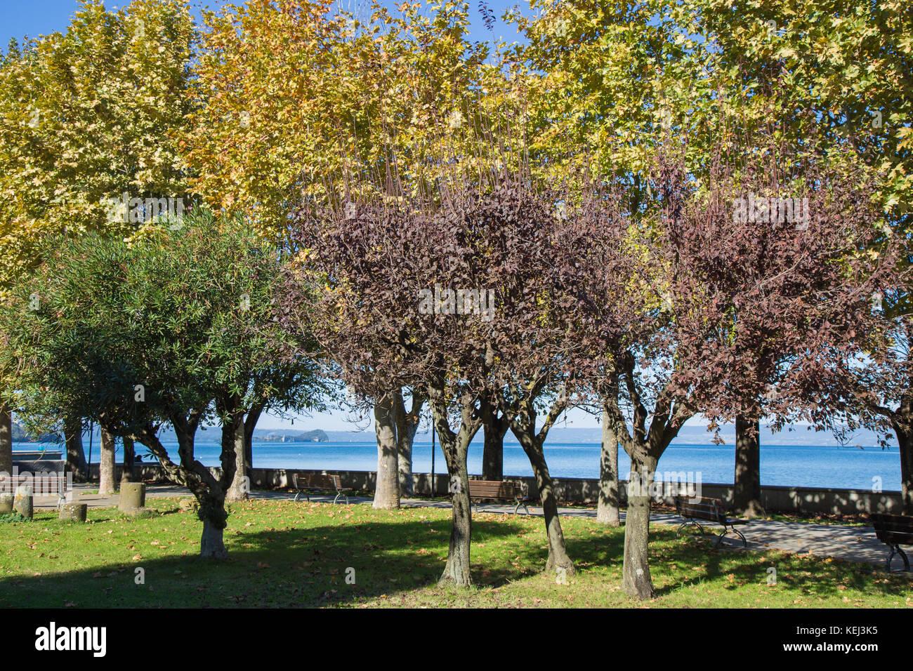 Des arbres sur les rives du lac de Bolsena, Marta. Photo Stock