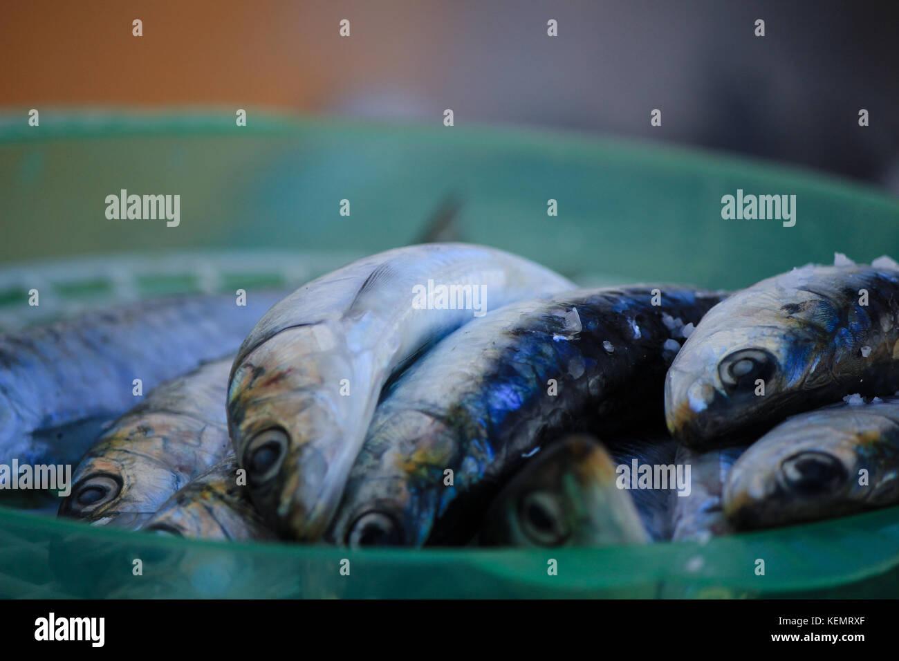 Sardines fraîches Photo Stock