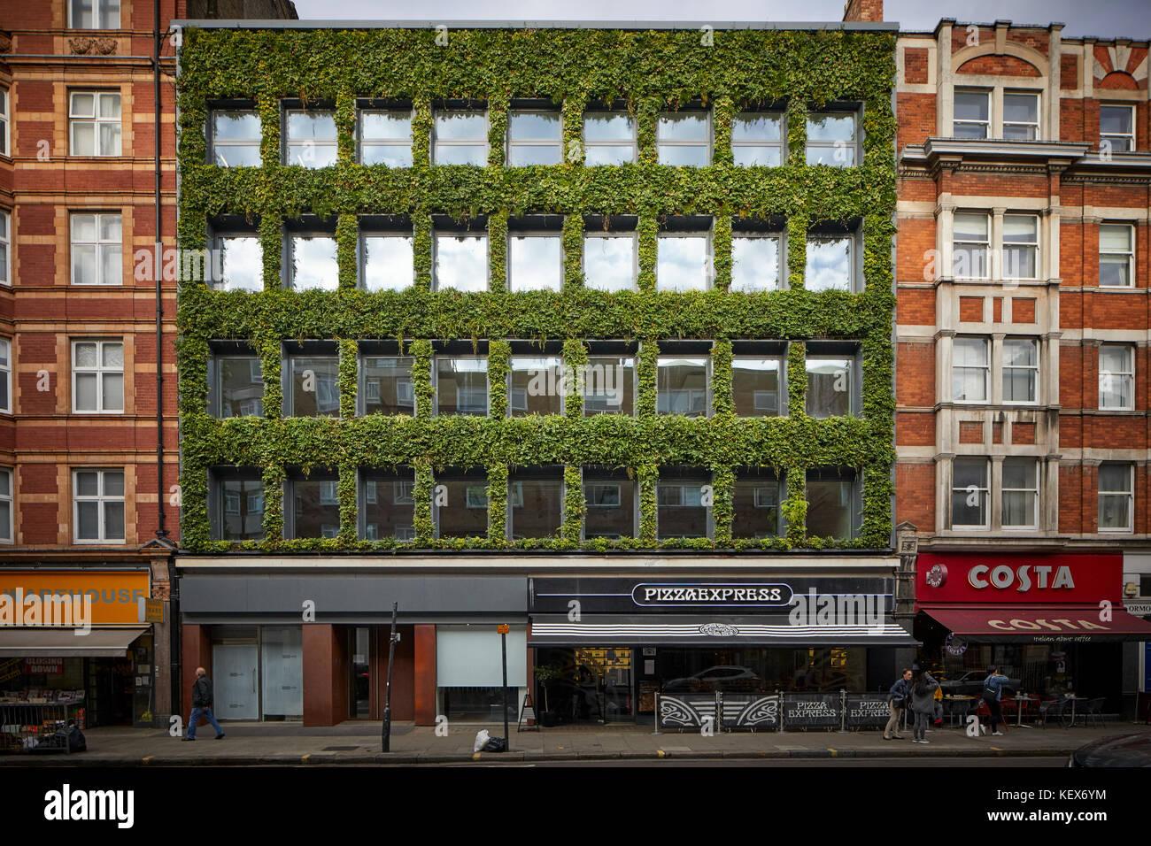 Plantes à feuilles persistantes mur vivant pour la façade de maison synergie sur Southampton Row à Photo Stock