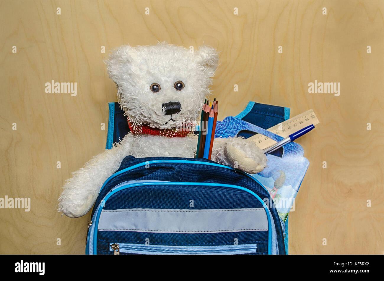 Ours blanc se trouve dans un sac à dos avec des crayons, stylo, coloration de l'ordinateur portable va Photo Stock