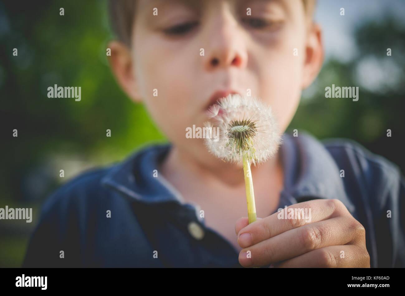 6-7 ans boy blowing dandelion Photo Stock