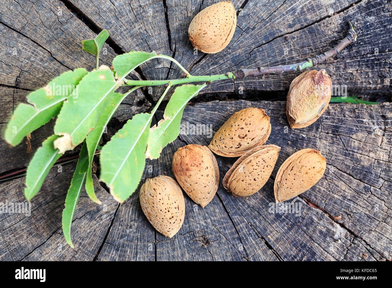 Amande séchée dans des obus sur le bois Photo Stock