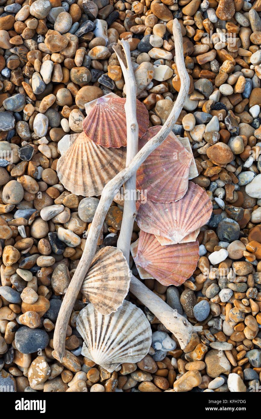 Coquilles St Jacques et du bois flotté sur la plage de galets Photo Stock