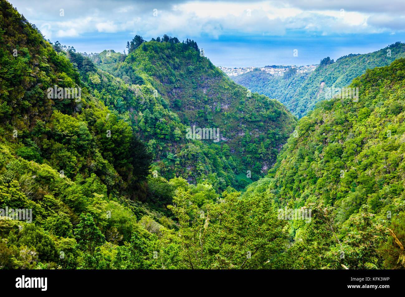 Laurisilva ou forêt de lauriers. Photo Stock