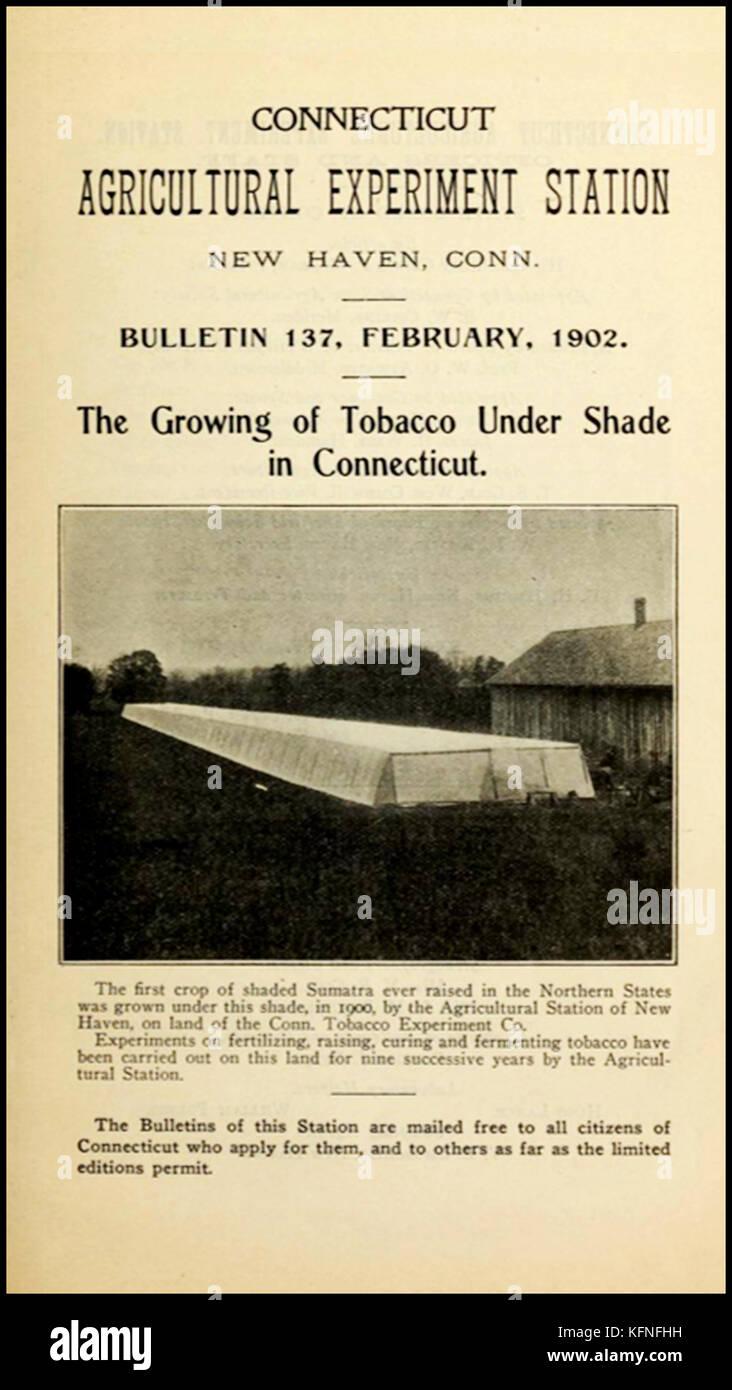 Histoire du tabac - une image de 1902 tentes ombragées expérimental pour les feuilles de tabac de plus en plus utilisé Banque D'Images