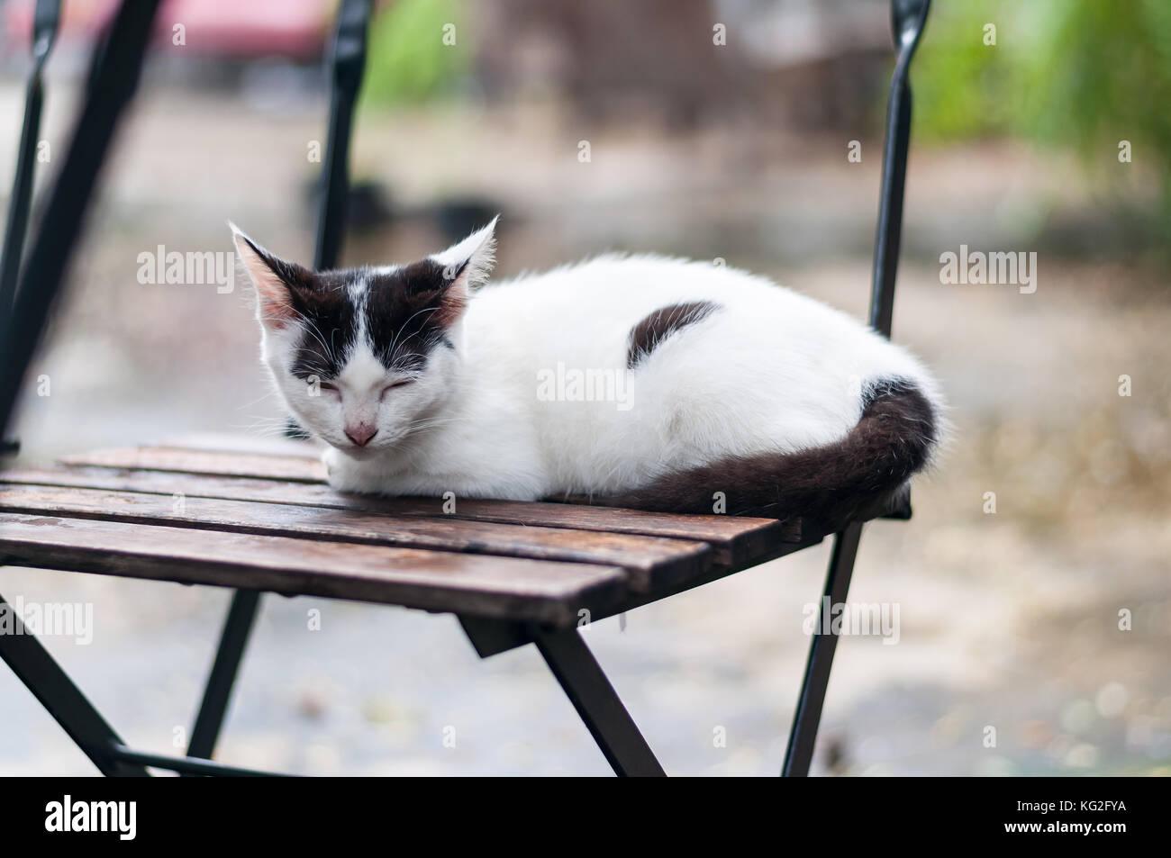 Crouch Noires Et Blanc Chat Une Taches Sur Des S'endormir Avec sQxdhCtr