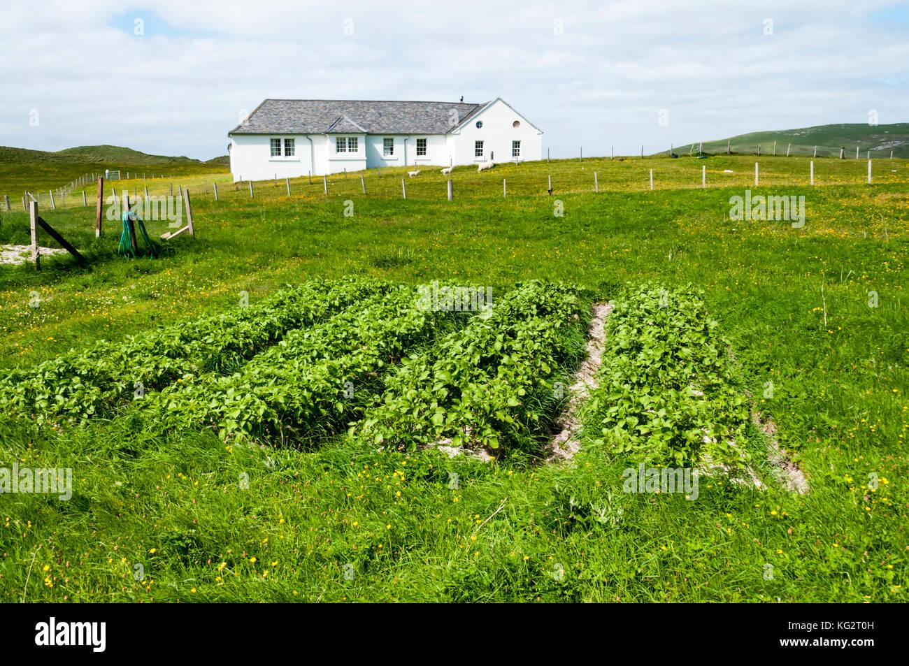 De plus en plus paresseux dans les légumes d'appoint sur l'île de Barra à Outer Hebrides Photo Stock