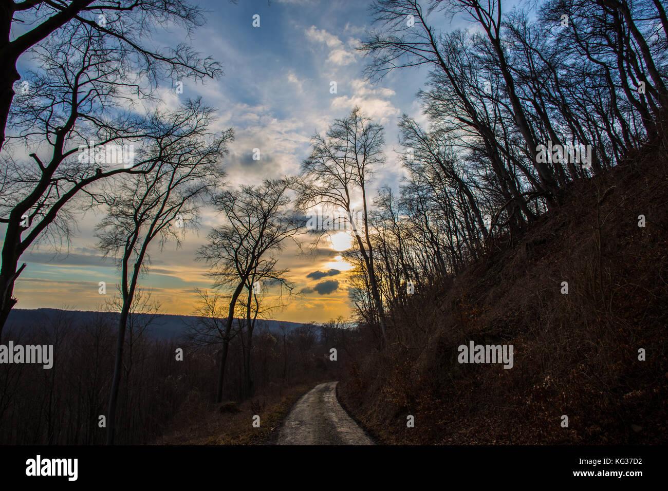 Coucher du soleil vu de la forêt de moyenne montagne allée, tout printemps avec arbres et nuages dans Photo Stock