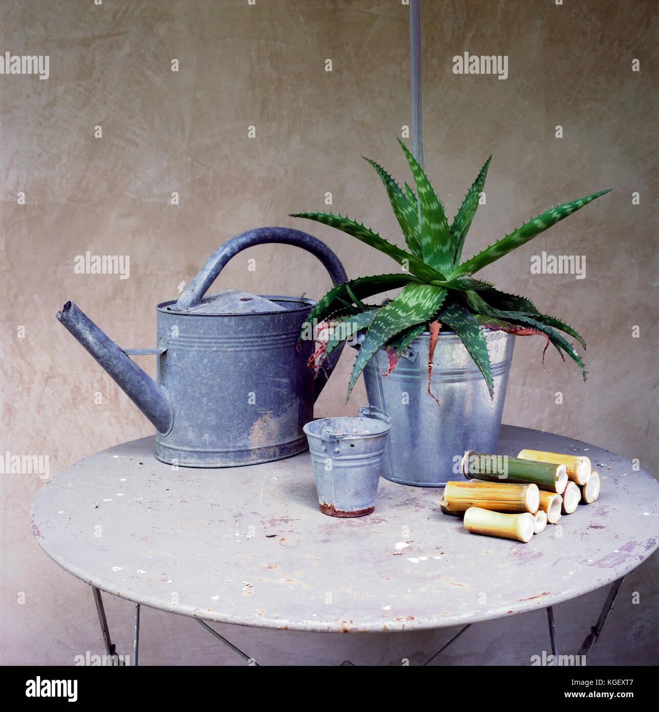 La vie encore d'objets et d'outils provenant d'un jardin: un arrosoir, une plante grasse d'un petit seau et quelques Banque D'Images