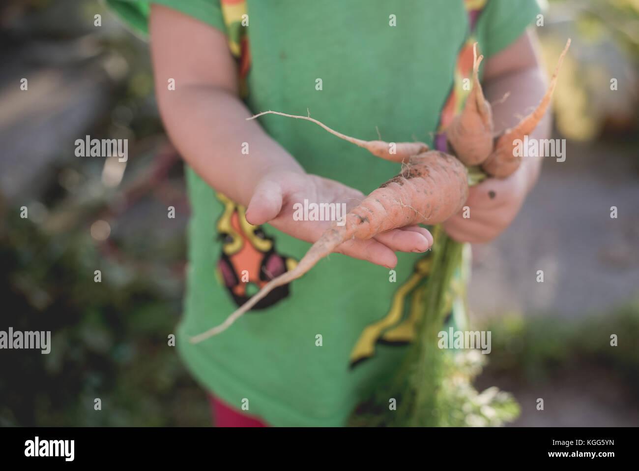Toddler holding carrots frais hors d'un jardin Photo Stock