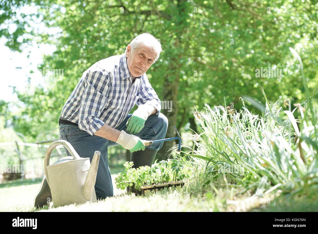 Man la plantation de plantes aromatiques dans le jardin Photo Stock