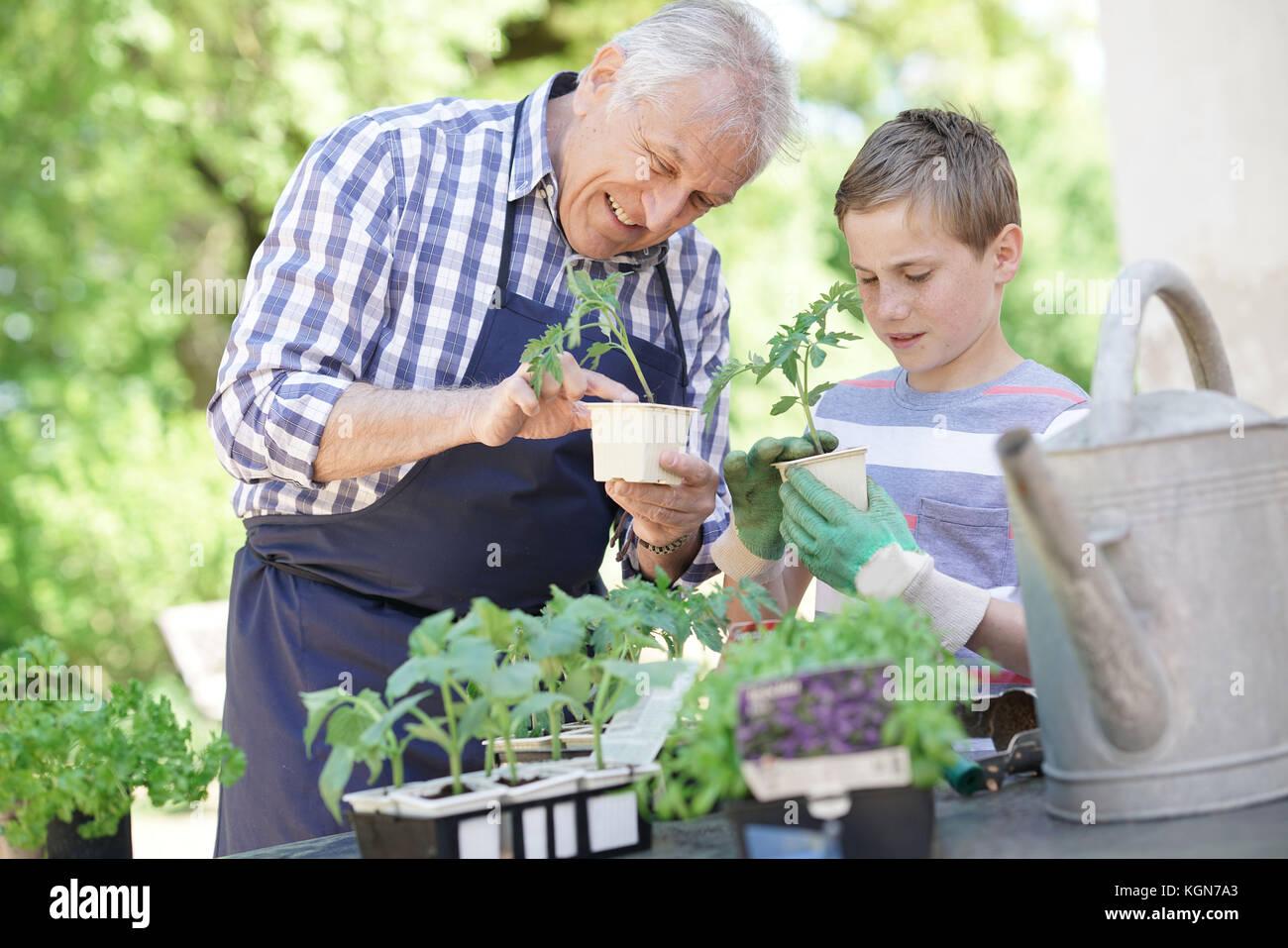Grand-père avec son petit-fils ensemble de jardinage Photo Stock