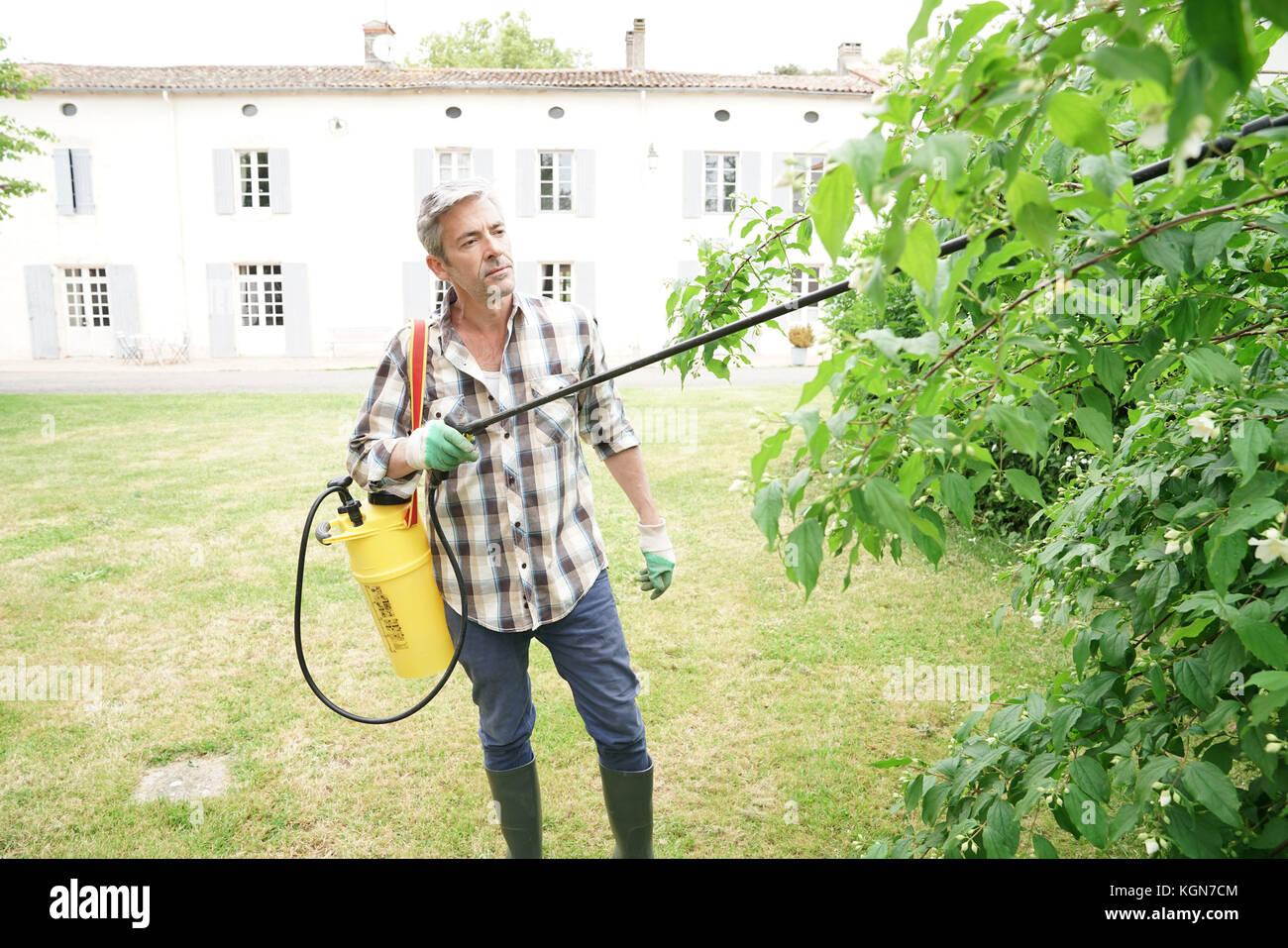 L'homme à la pulvérisation de l'insecticide sur les arbres du jardin Photo Stock