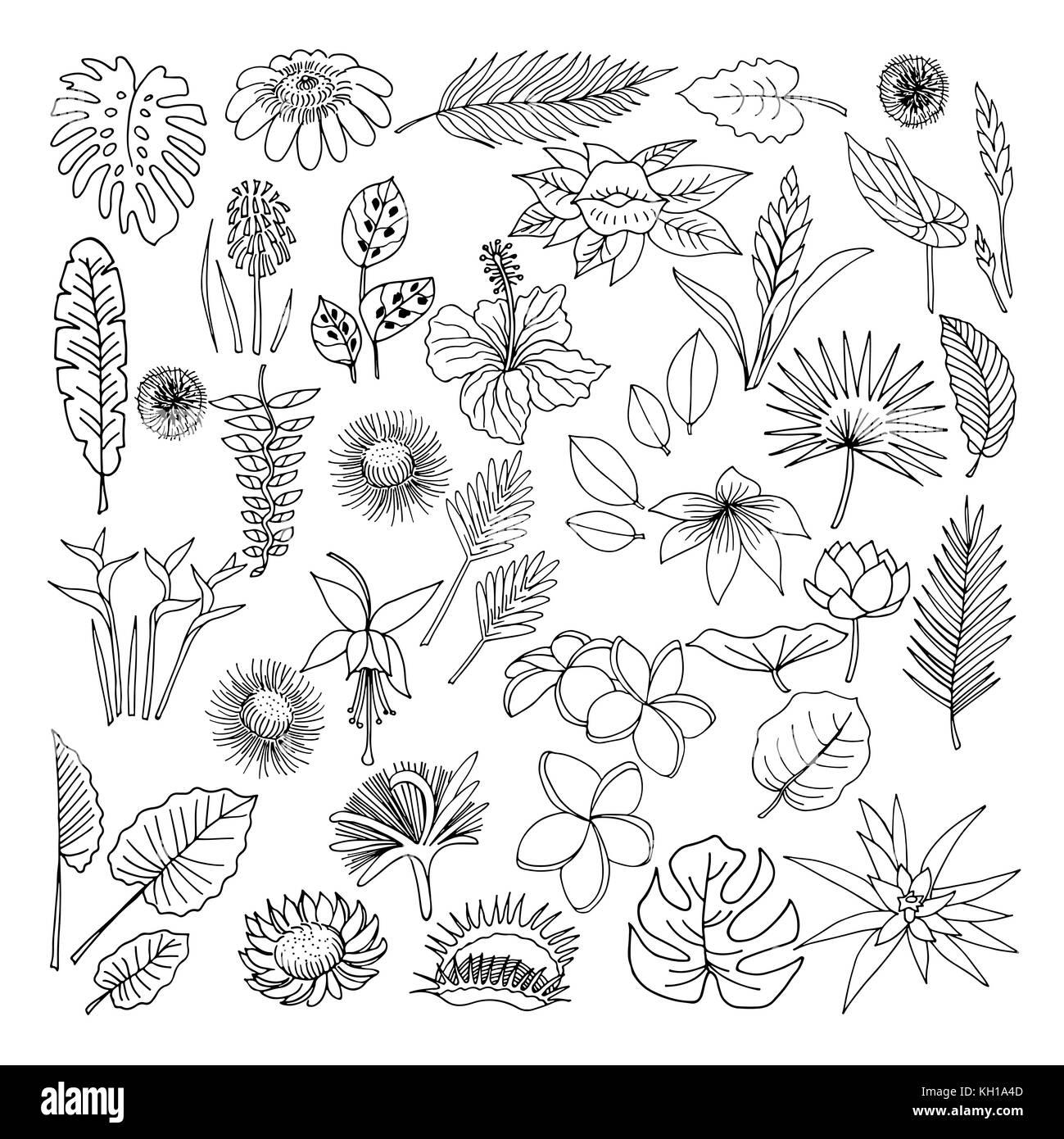 Fleurs Tropicales Style Croquis Illustration Isolé Sur Fond Blanc