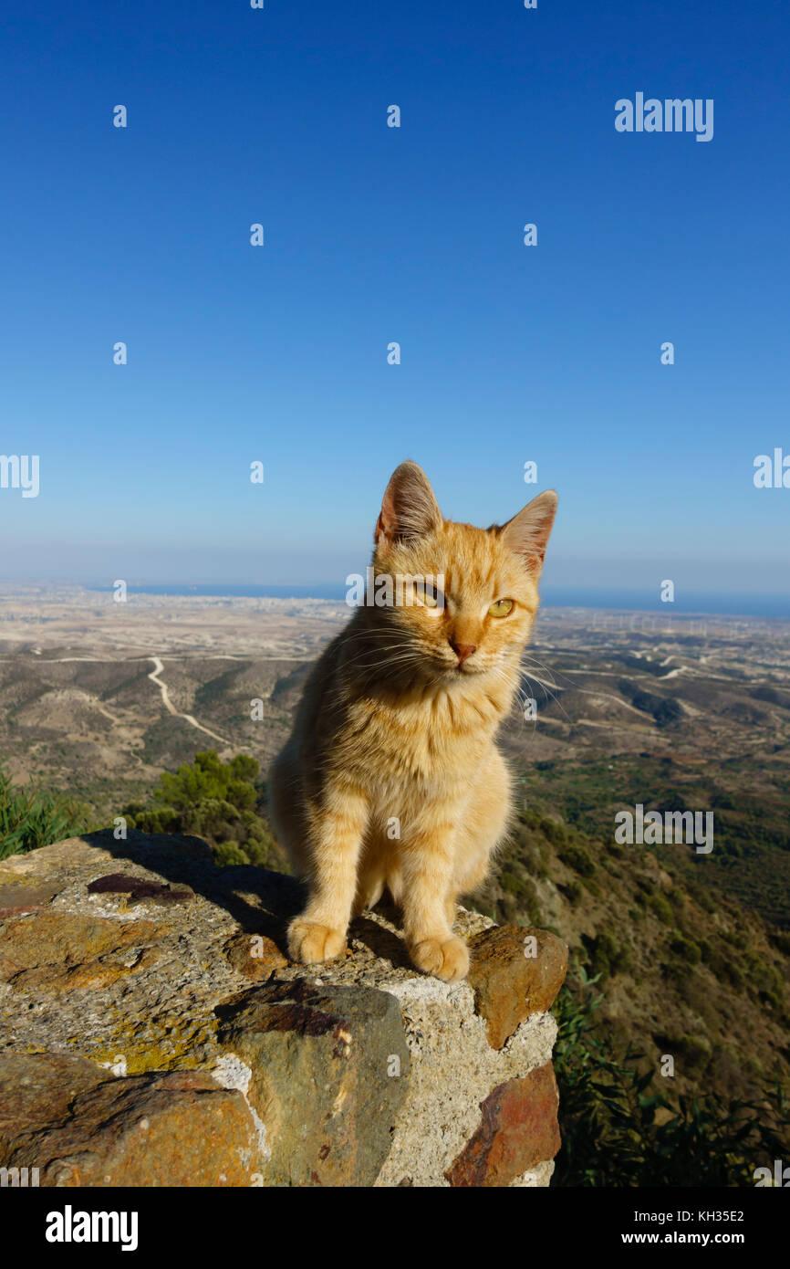 Le gingembre cat assis sur le mur donnant sur le Monastère de Stavrovouni à Larnaca, Chypre. Banque D'Images