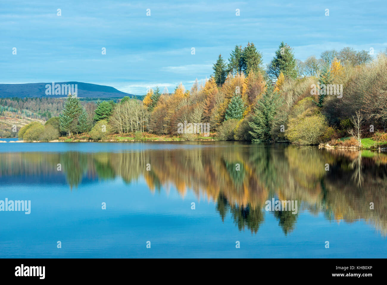 Arbres se reflétant dans les eaux calmes et encore du lac Llwyn Onn dans le parc national de Brecon Beacons, Photo Stock