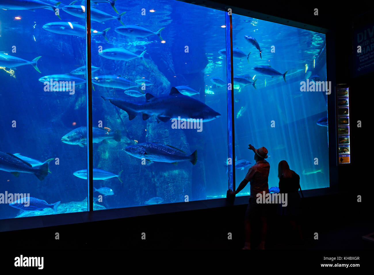 Grand bassin de requin, Two Oceans Aquarium, Cape Town, West Cape, Afrique du Sud Photo Stock