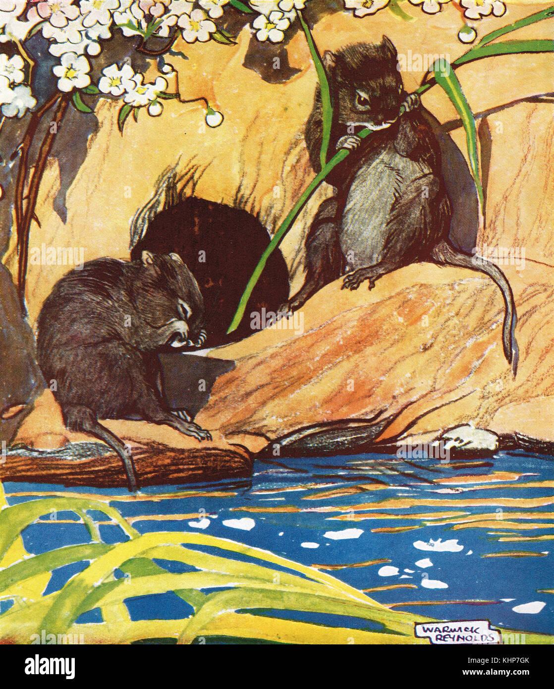 Les campagnols de l'eau européenne manger par une rivière Banque D'Images