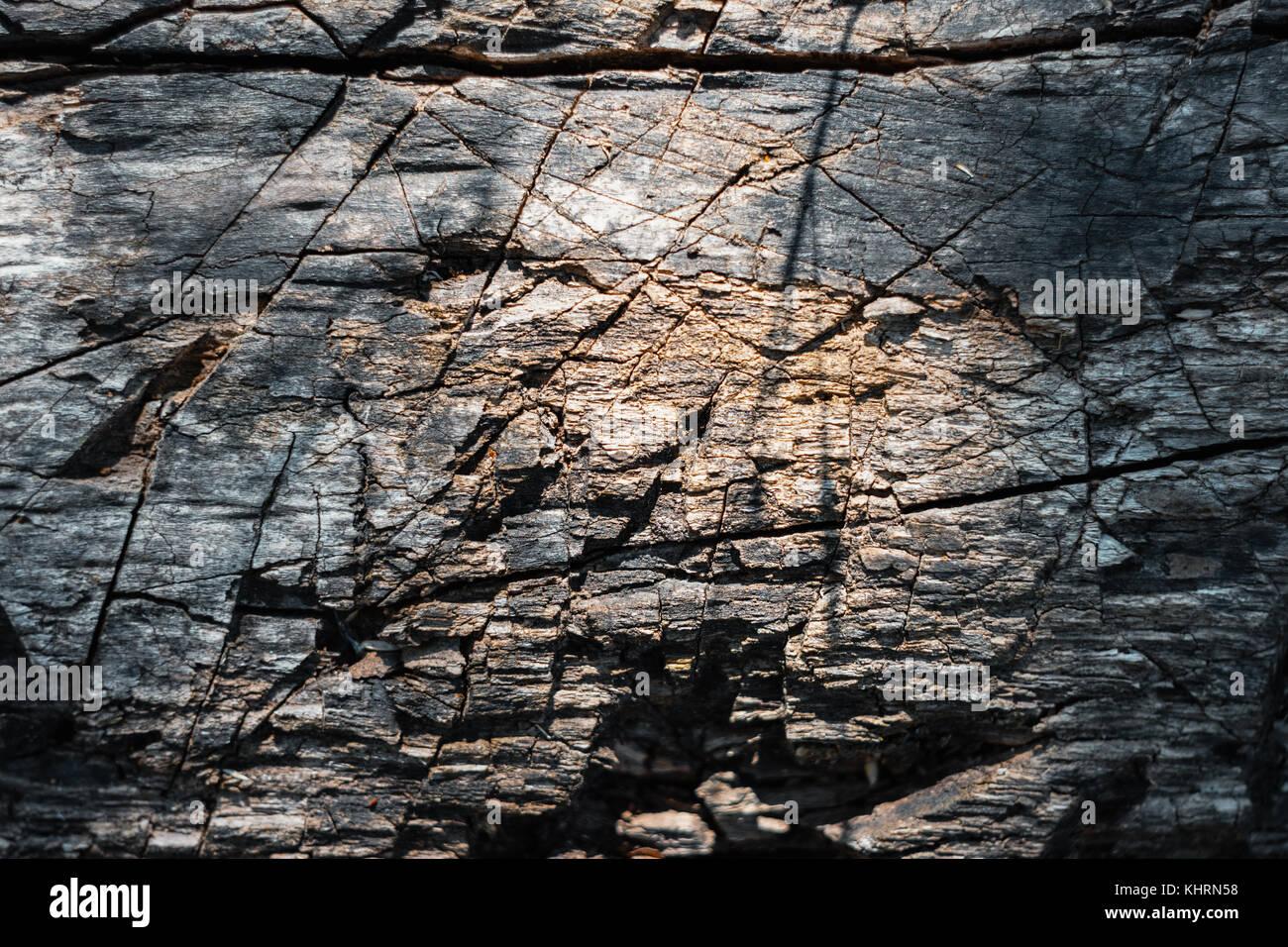 Tourné directement au-dessus de l'écorce d'un arbre sculpté avec entaille Photo Stock