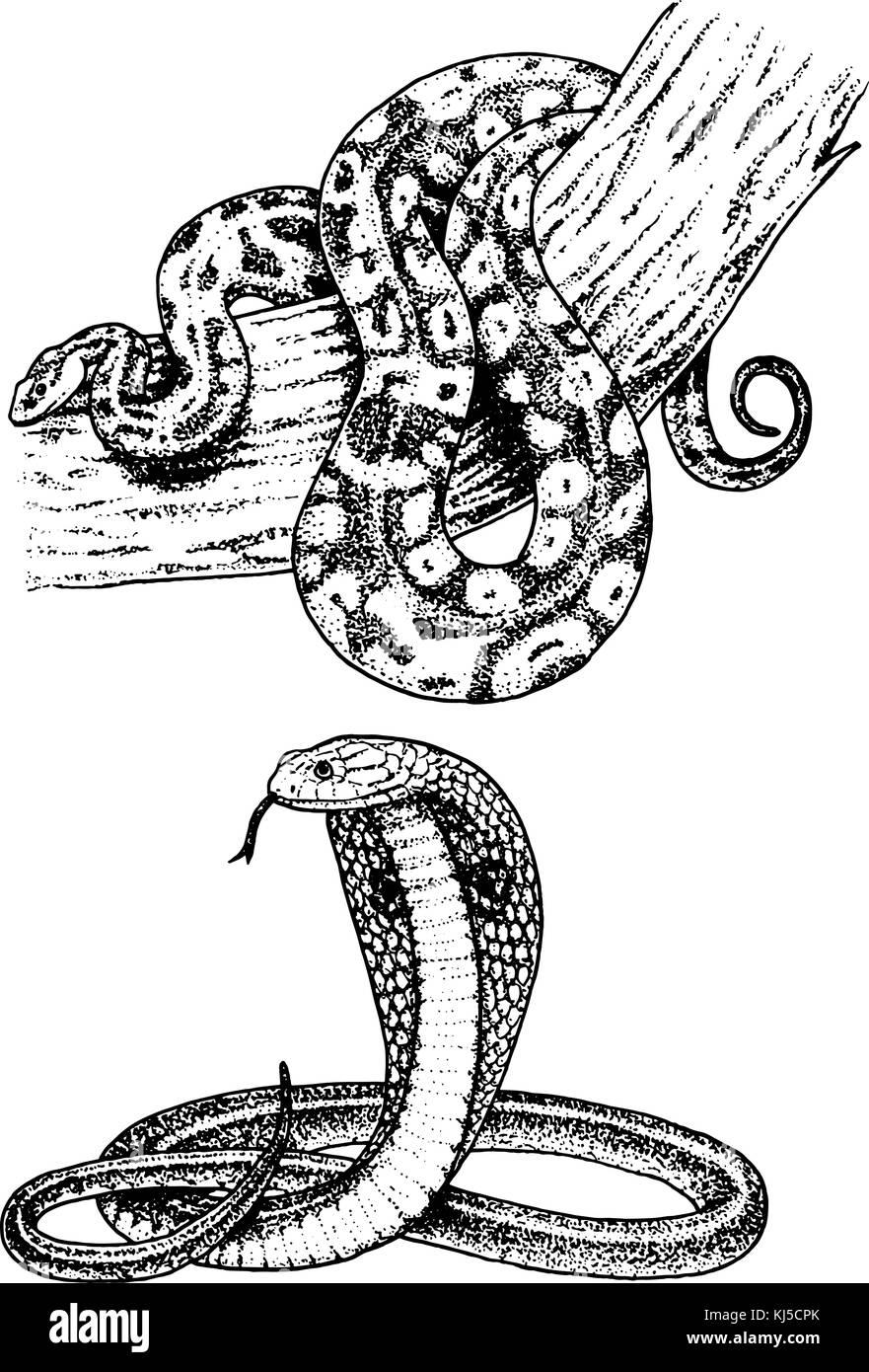 Serpent Serpent Viper Cobra Et Python Anaconda Ou Viper