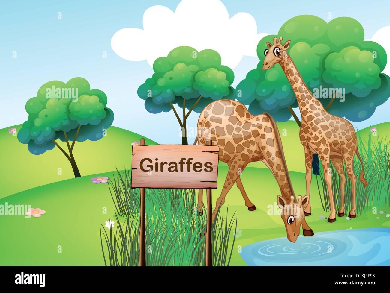 Illustration des deux girafes à la forêt avec un panneau en bois Illustration de Vecteur