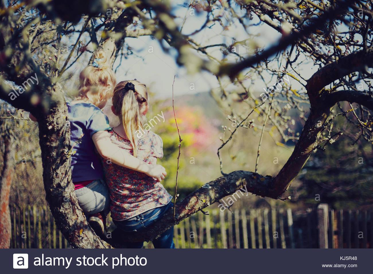Les filles assis dans un arbre Photo Stock