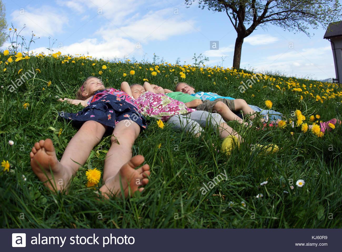 Couché dans la prairie Photo Stock