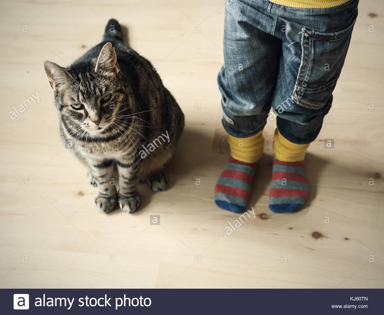 Grumpy cat et les tout-petits Photo Stock