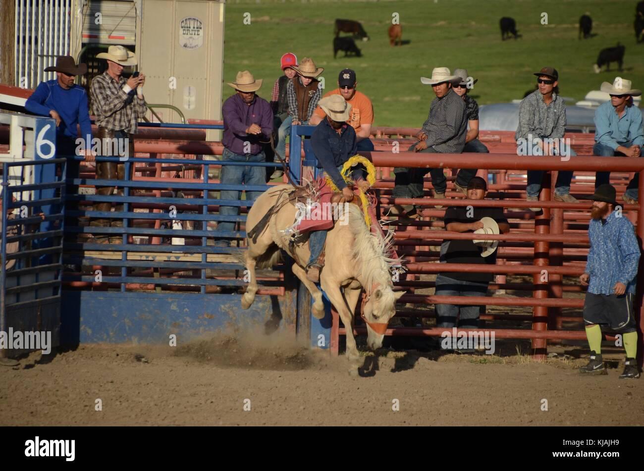 Cowboy Bull Rider Équitation Rodeo équipe Roundup T-Shirt Chemise