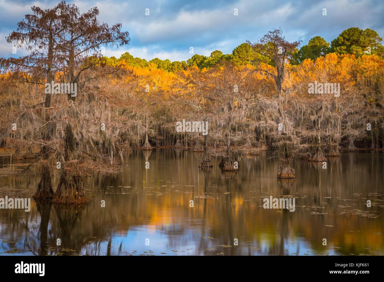 Caddo Lake est un lac et des terres humides situées sur la frontière entre le Texas et la Louisiane. Photo Stock