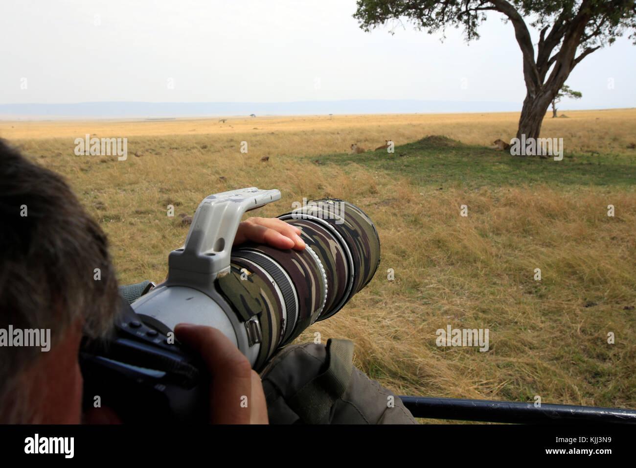 Safari photo. Photographe de la faune. Le Masai Mara. Au Kenya. Photo Stock