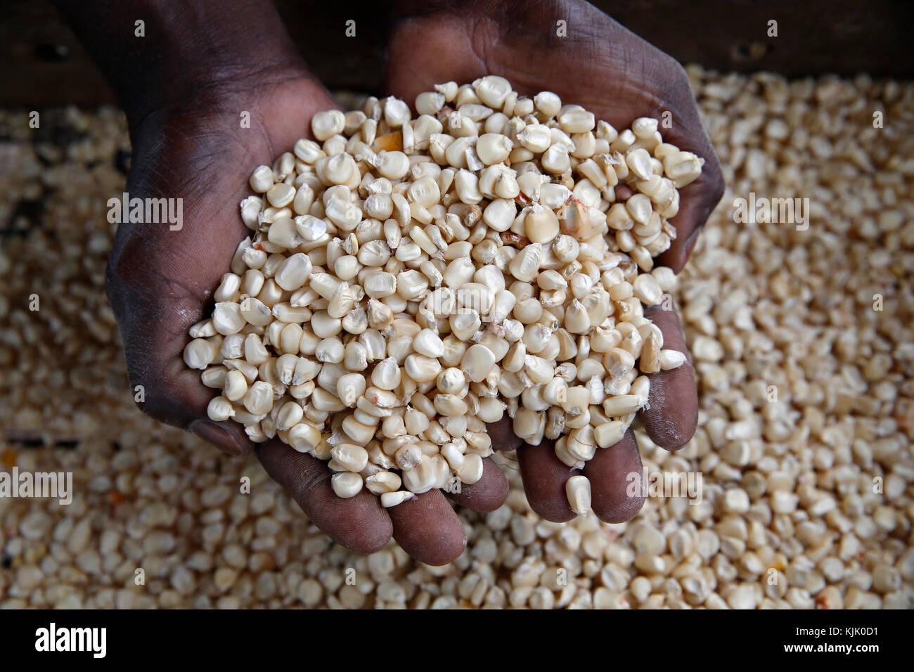 Ernest Abika a acheté un moulin à maïs avec un prêt de 2 millions d'utilisateurs de l'Ouganda Photo Stock