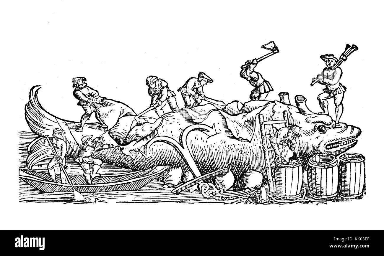 Dépeçage des pêcheurs une baleine, le décapage de la couche externe de la peau gras le corps, vintage illustration Banque D'Images