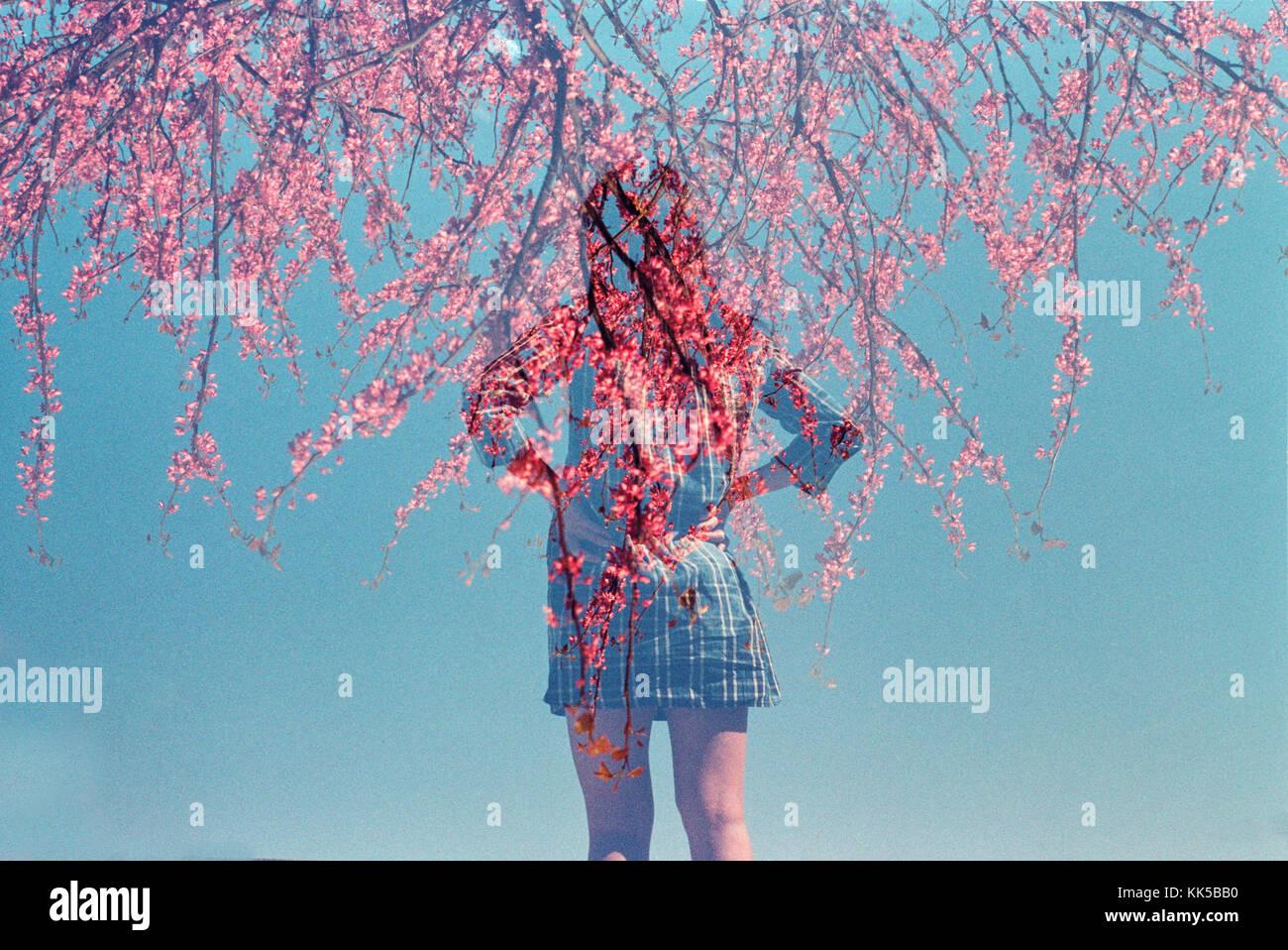 Double exposition d'une femme regardant dans la distance avec les arbres en fleur rose Photo Stock