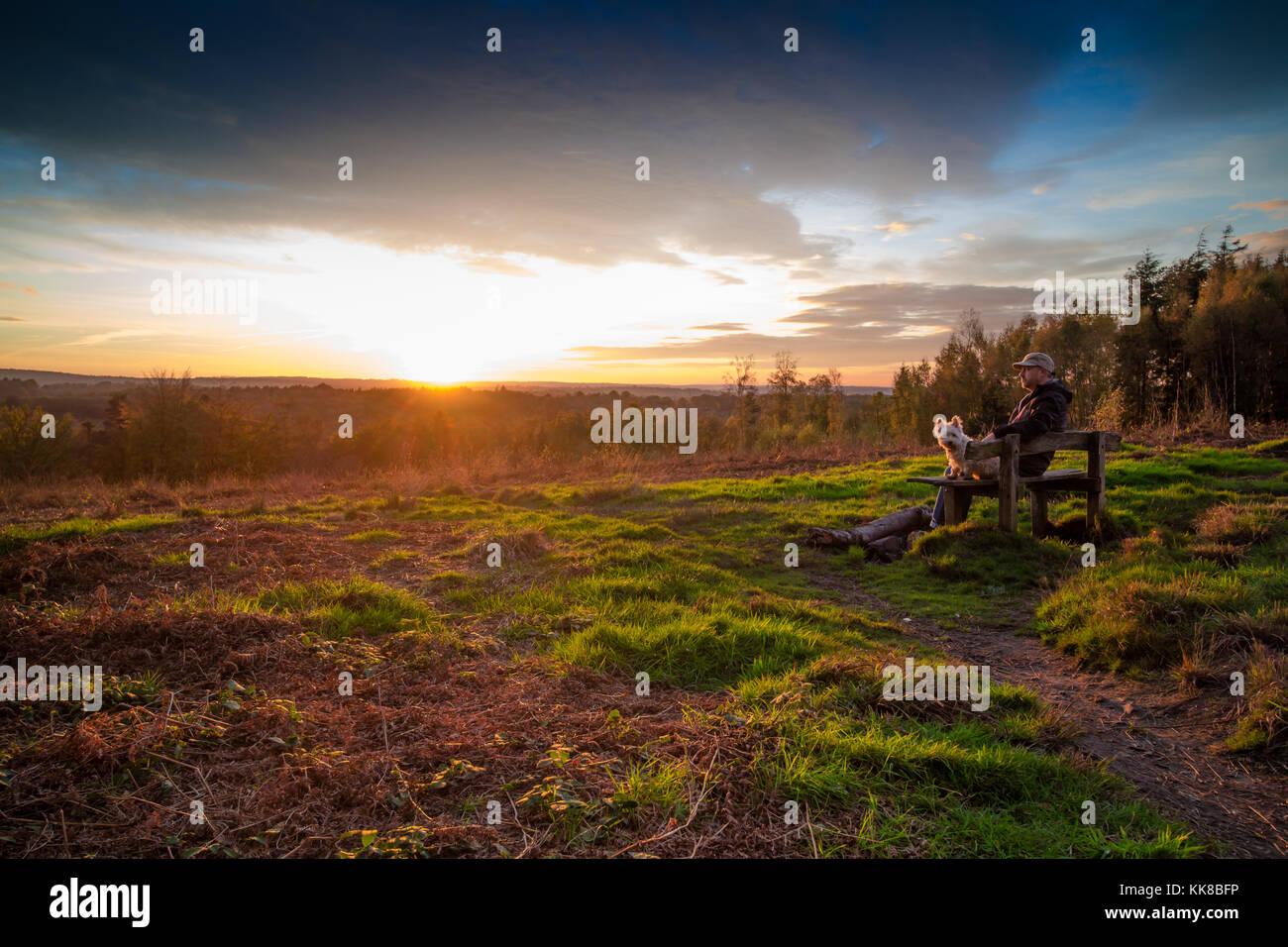 Tunbridge Wells kent forêt hargate; l'homme avec bouchon sur assis sur un banc avec westie chien à la recherche de l'autre côté de la bruyère et fougère valley regardant le coucher du soleil Banque D'Images