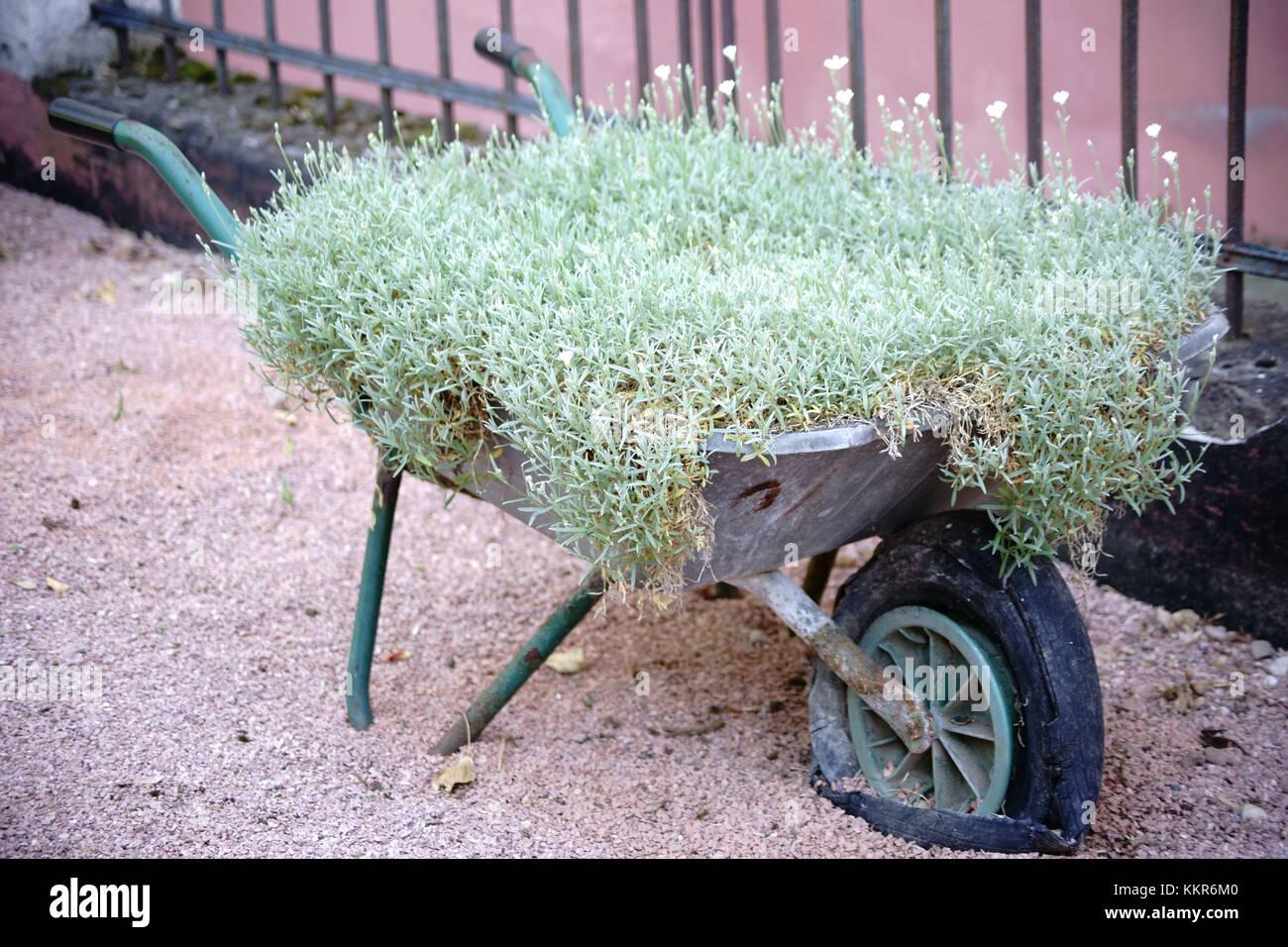 Pot De Fleur Avec Des Pneus un vieux barrow avec pneu plat utilis� comme un pot de