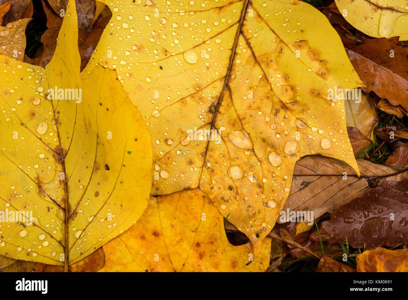 Automne feuilles tombées à l'eau diminue. Banque D'Images