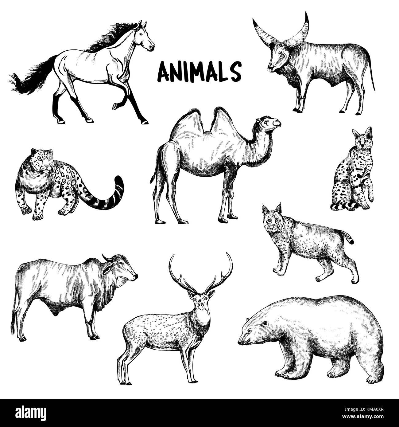 Ensemble de croquis dessinés à la main animaux style. vector illustration isolé sur fond blanc. Illustration de Vecteur