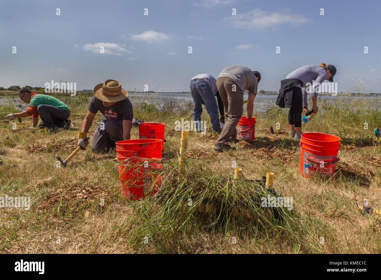Cinq personnes qui travaillent à l'événement,nettoyage,littoral mlk oakland,california,usa Photo Stock