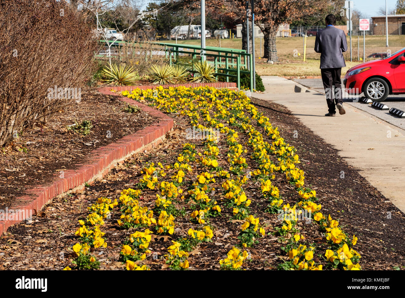 Un Lit De Jardin Rangees De Pensees Jaunes Plantes Pour L Hiver La