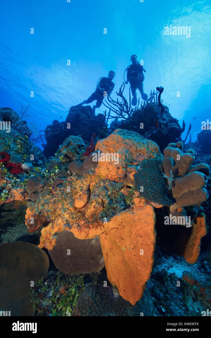 Les plongeurs d'explorer un récif à grand cayman. Banque D'Images