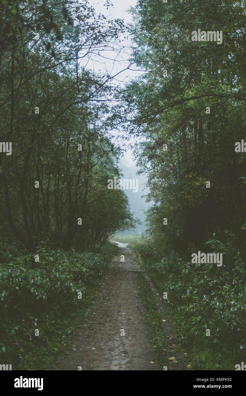 Chemin en forêt brumeuse. Matin d'été vert. Photo Stock