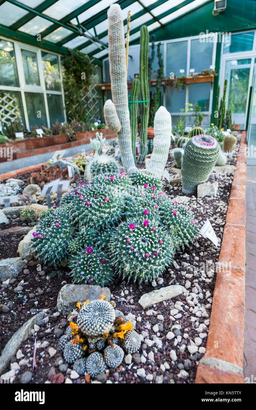 cactus greenhouse photos cactus greenhouse images alamy. Black Bedroom Furniture Sets. Home Design Ideas